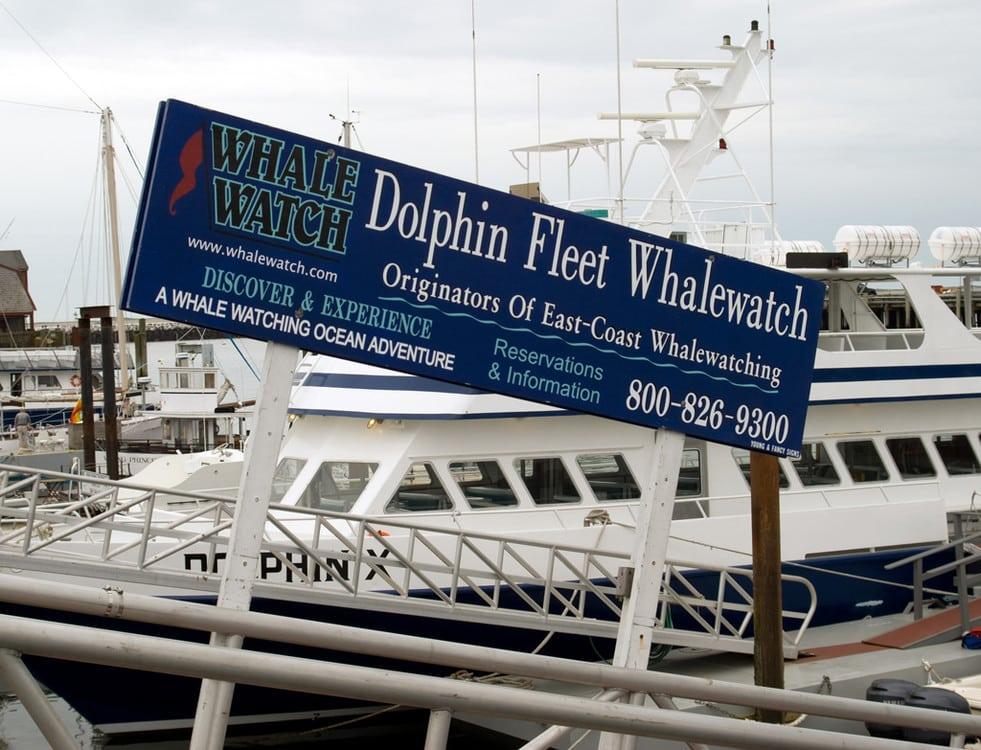 Dolphin Fishing Fleet - Cook Cashier